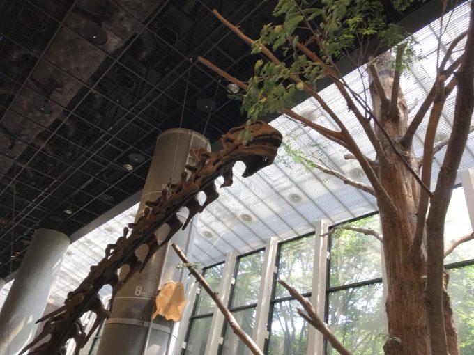 茨城県自然博物館のヌオエロサウルスの化石
