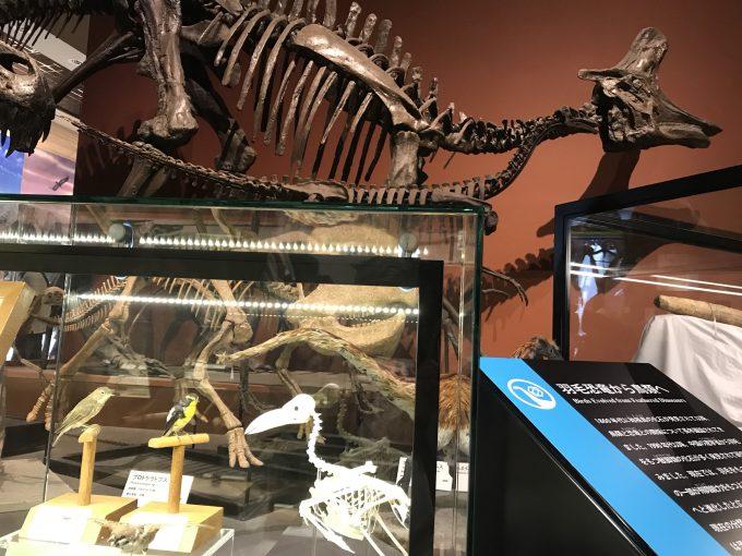 茨城県自然博物館の恐竜展示