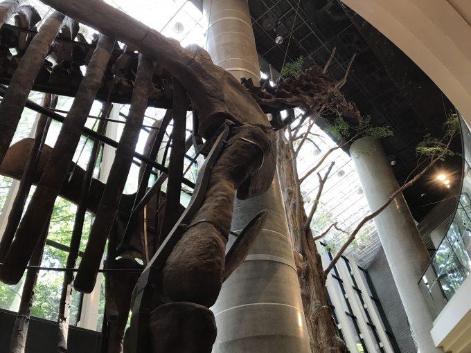茨城県自然博物館のヌオエロサウルス化石を下から見たところ