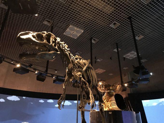 国立科学博物館のアロサウルス