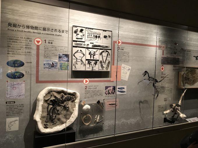国立科学博物館の恐竜展示解説