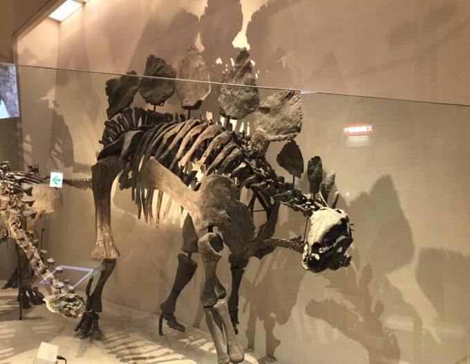国立科学博物館のステゴサウルスの化石