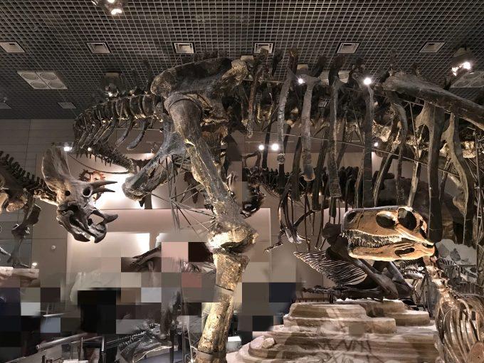 国立科学博物館の恐竜化石