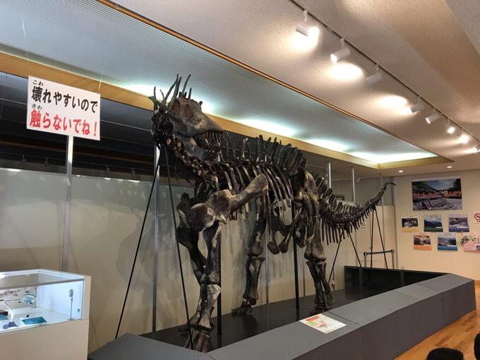 アマルガサウルスの化石