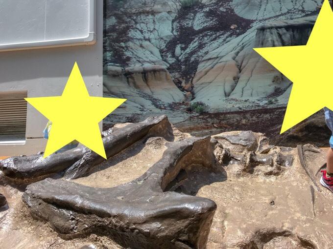 神流町恐竜センターのティラノサウルスの産状骨格